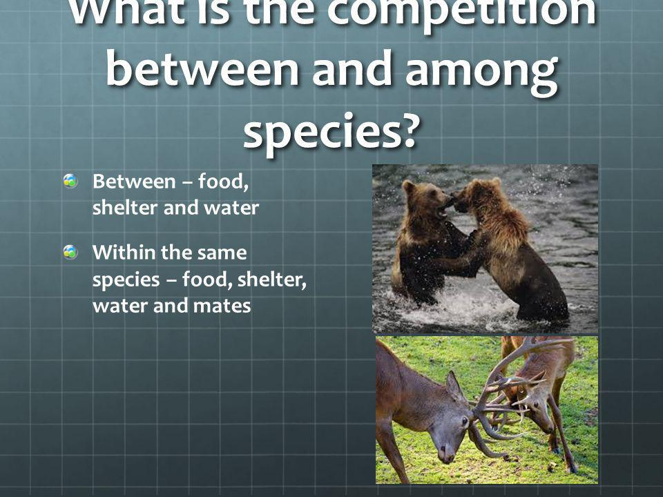 What is the competition between and among species