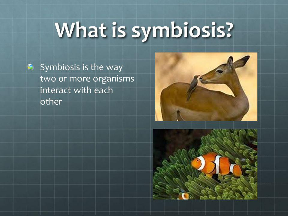 What is symbiosis Symbiosis is the way two or more organisms interact with each other