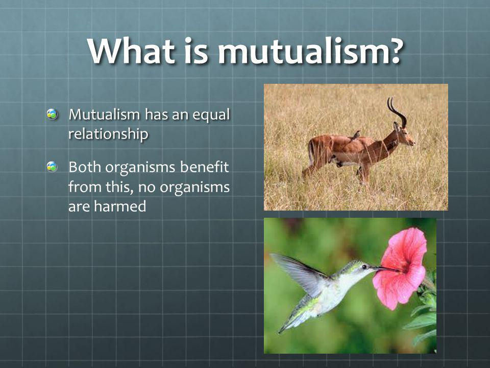What is mutualism Mutualism has an equal relationship