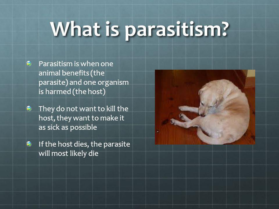 What is parasitism Parasitism is when one animal benefits (the parasite) and one organism is harmed (the host)