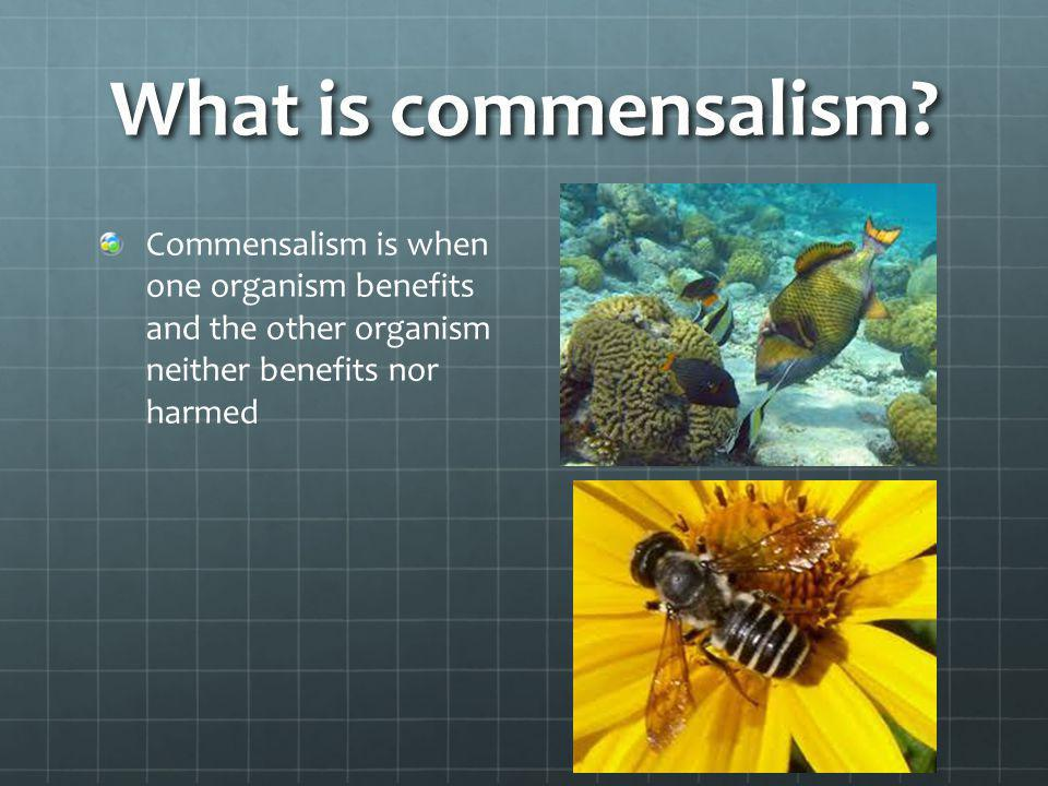 What is commensalism.