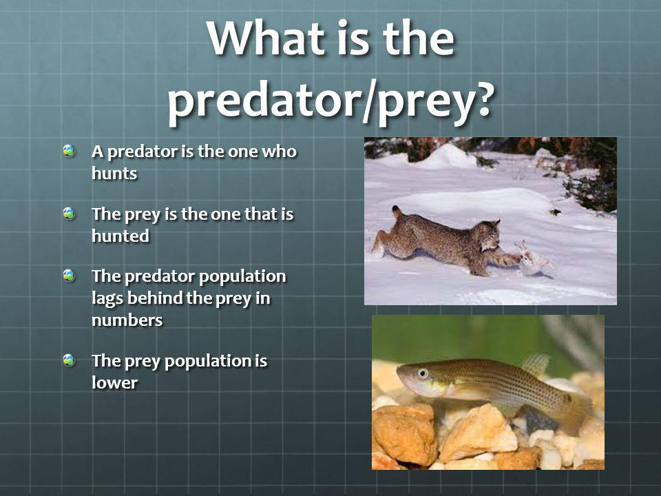 What is the predator/prey