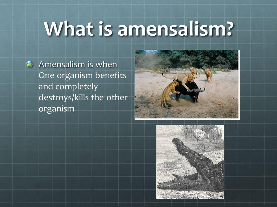 What is amensalism.