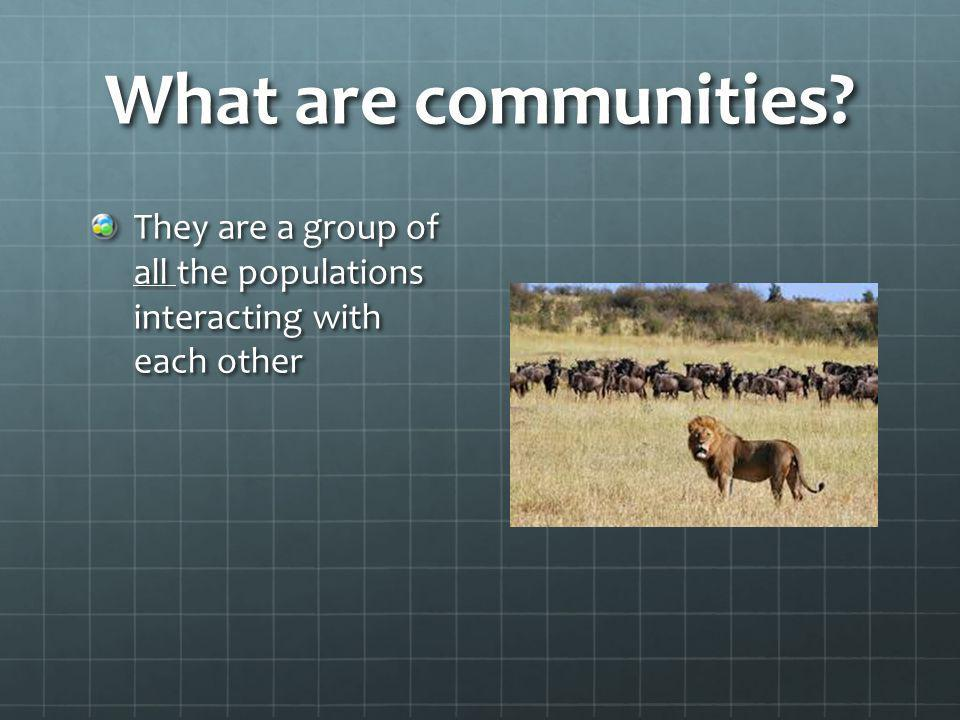 What are communities They are a group of all the populations interacting with each other