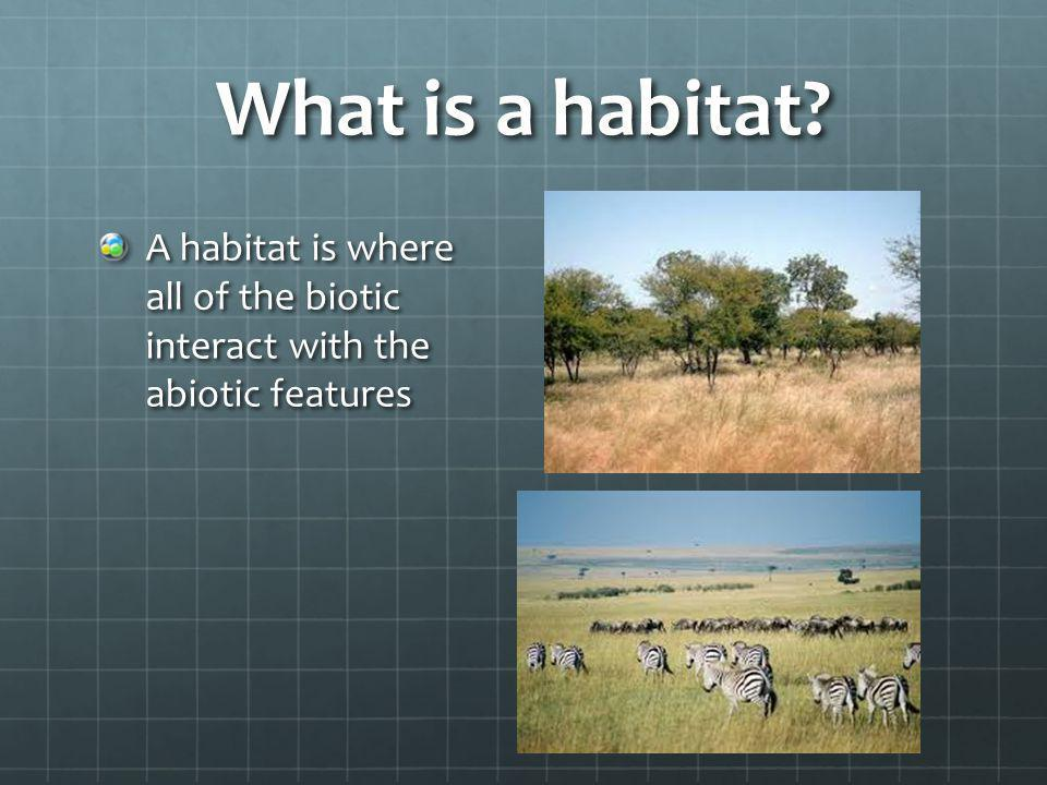 What is a habitat A habitat is where all of the biotic interact with the abiotic features