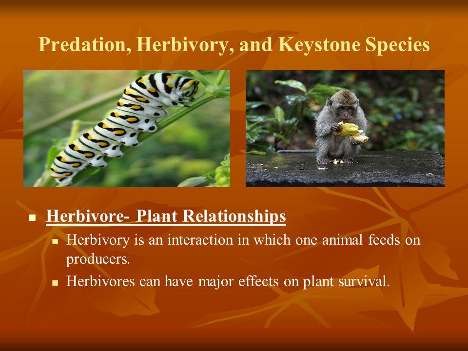 Predation, Herbivory, and Keystone Species