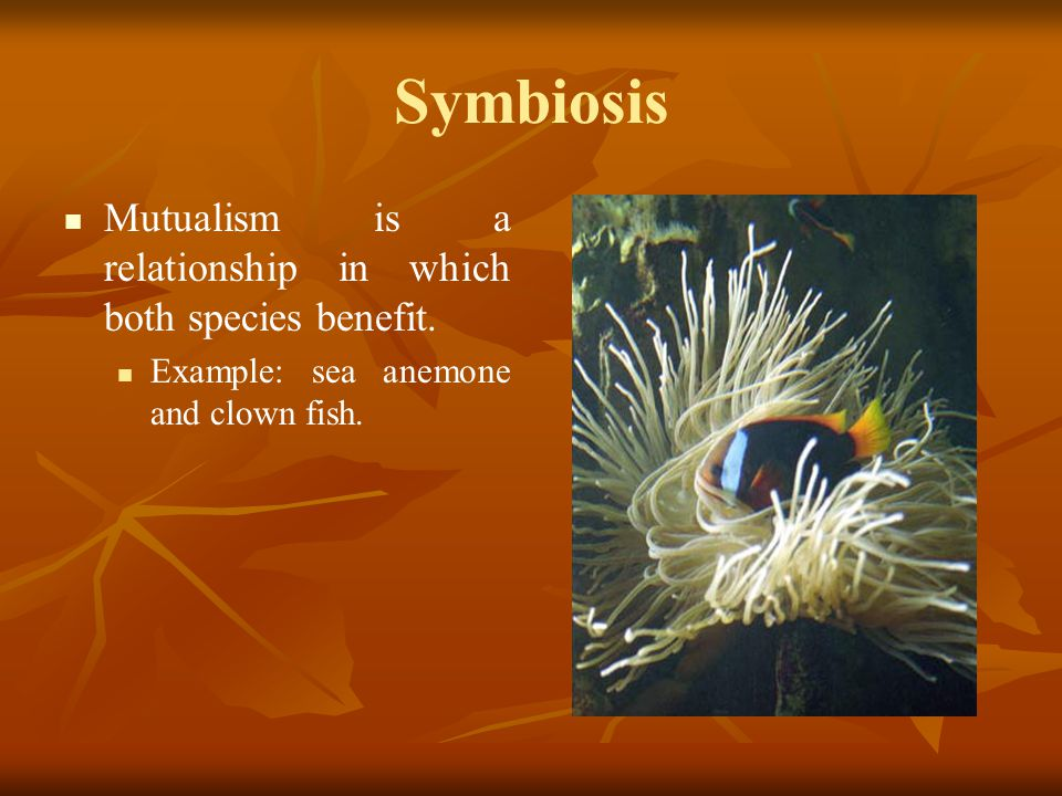 Symbiosis Mutualism is a relationship in which both species benefit.