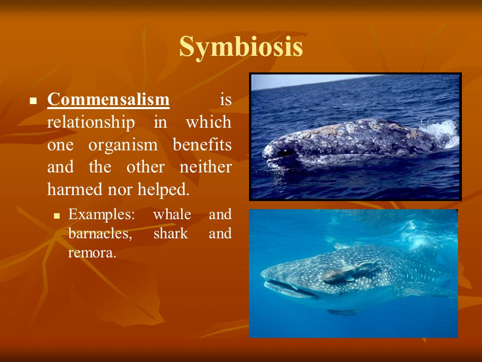 Symbiosis Commensalism is relationship in which one organism benefits and the other neither harmed nor helped.