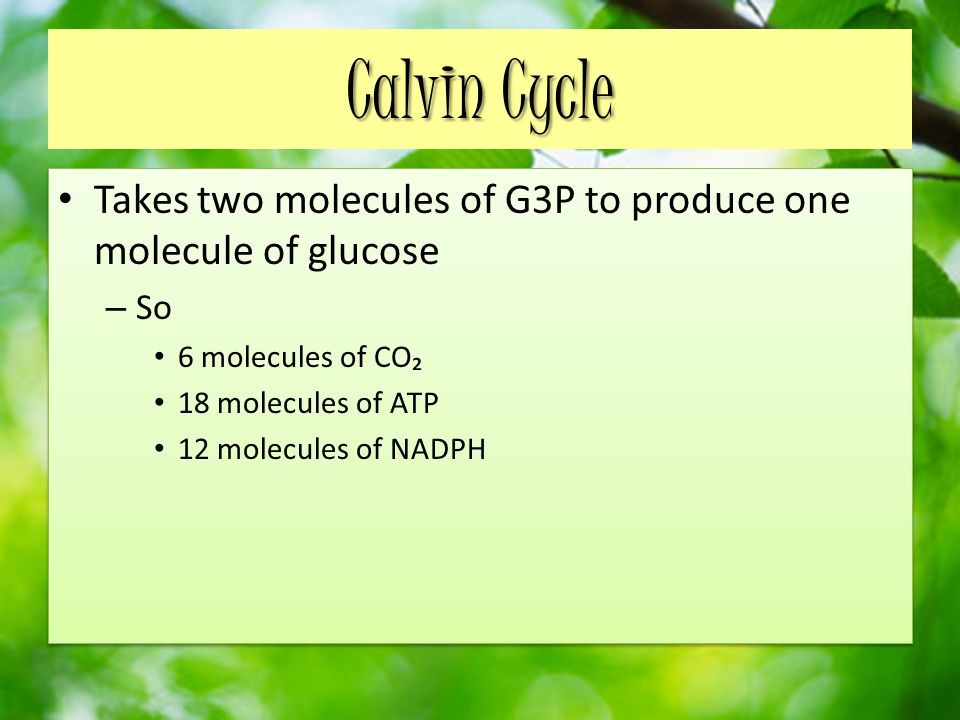 Calvin Cycle Takes two molecules of G3P to produce one molecule of glucose. So. 6 molecules of CO₂.