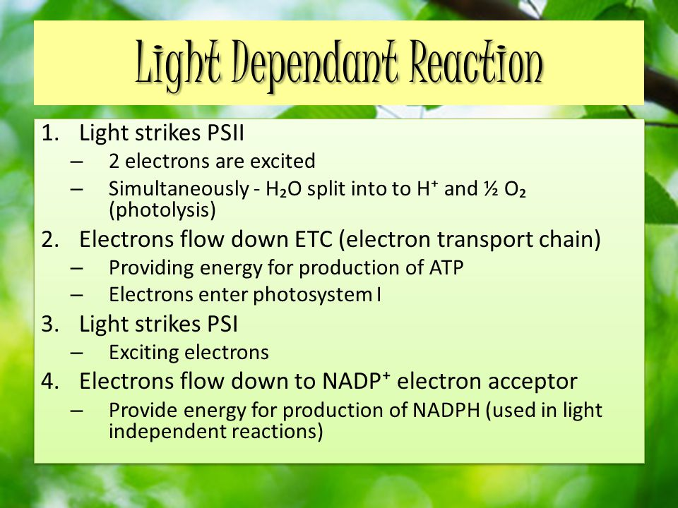 Light Dependant Reaction