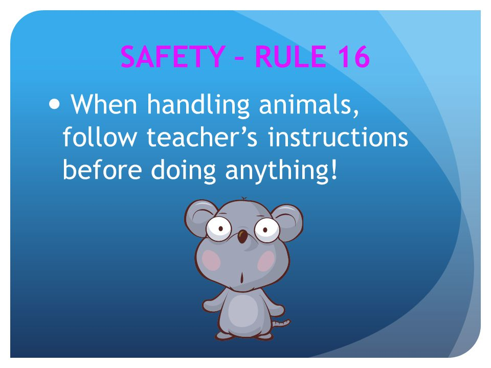 SAFETY – RULE 16 When handling animals, follow teacher's instructions before doing anything!