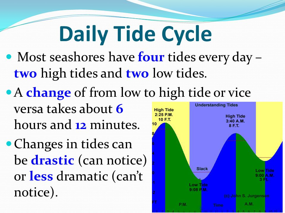 Daily Tide Cycle Most seashores have four tides every day – two high tides and two low tides.