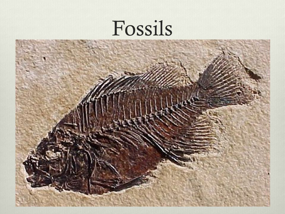 Fossils Shows earth is old – there is enough time for descent with modification to occur