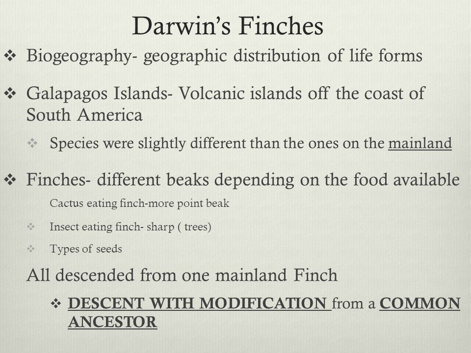 Darwin's Finches Biogeography- geographic distribution of life forms
