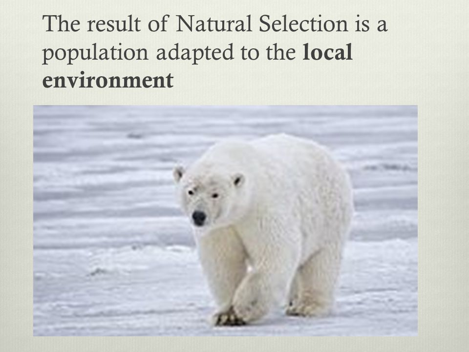 The result of Natural Selection is a population adapted to the local environment