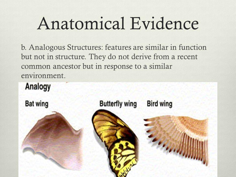 Anatomical Evidence