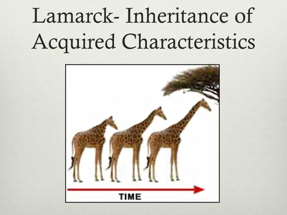Lamarck- Inheritance of Acquired Characteristics