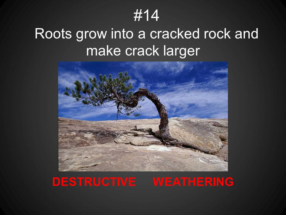 #14 Roots grow into a cracked rock and make crack larger