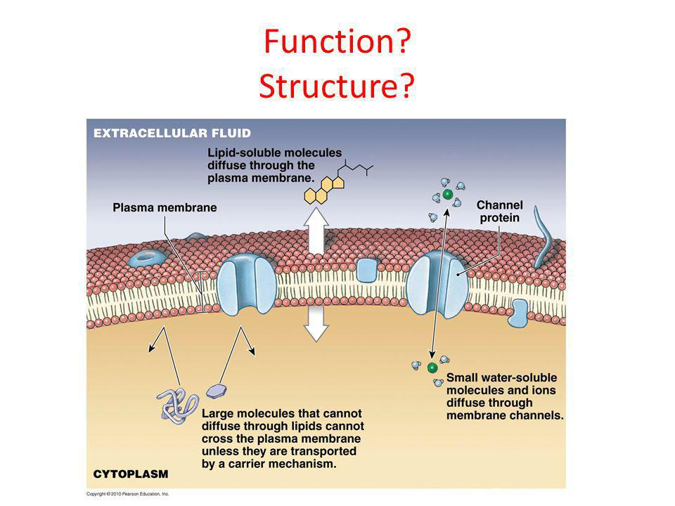 Function Structure