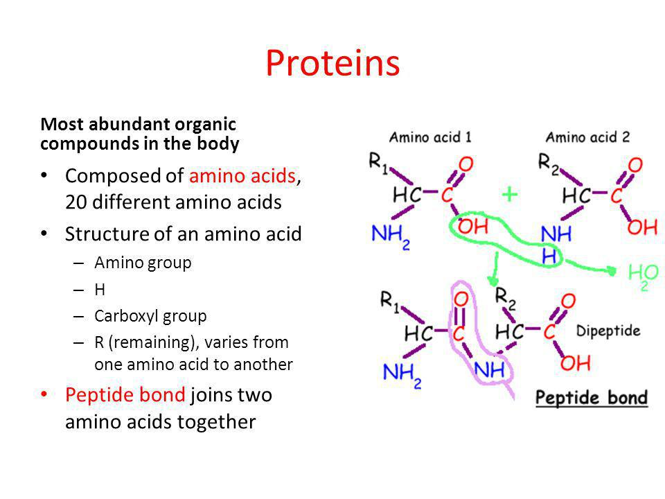 Proteins Composed of amino acids, 20 different amino acids