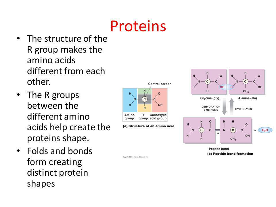 Proteins The structure of the R group makes the amino acids different from each other.