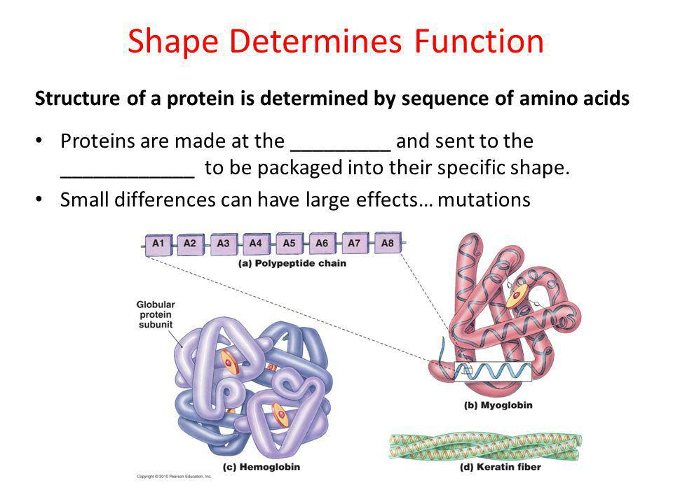 Shape Determines Function