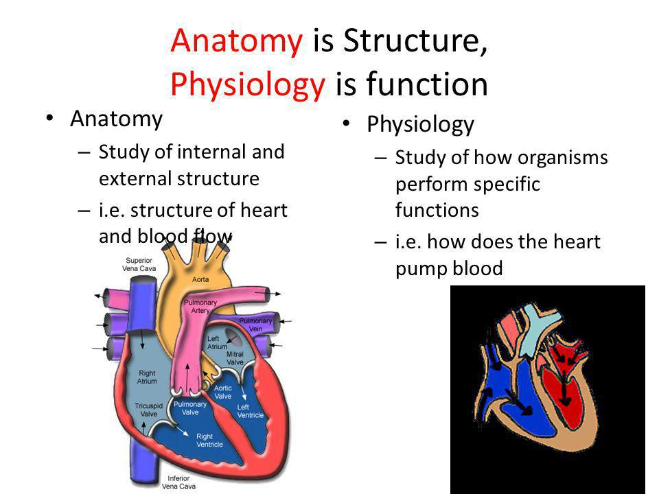 Anatomy is Structure, Physiology is function