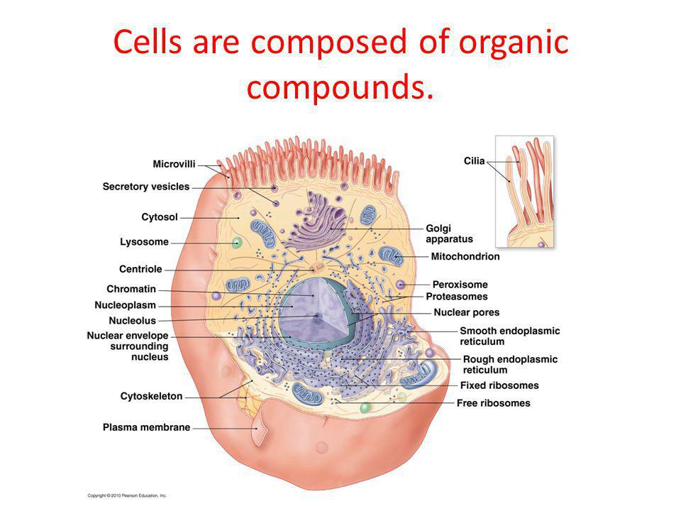 Cells are composed of organic compounds.
