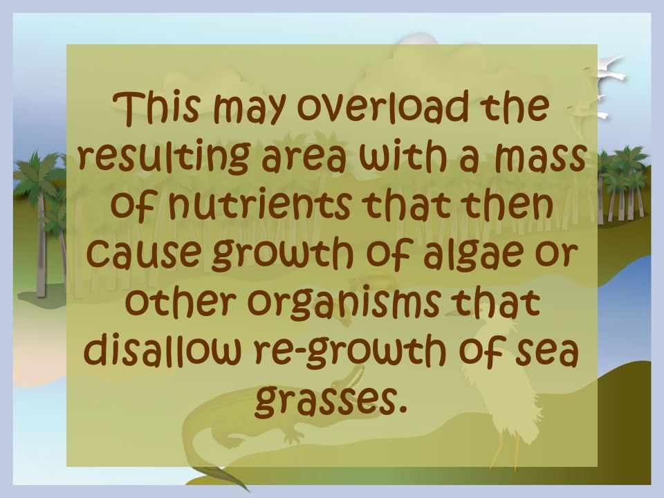 This may overload the resulting area with a mass of nutrients that then cause growth of algae or other organisms that disallow re-growth of sea grasses.