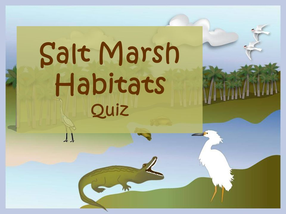 Salt Marsh Habitats Quiz
