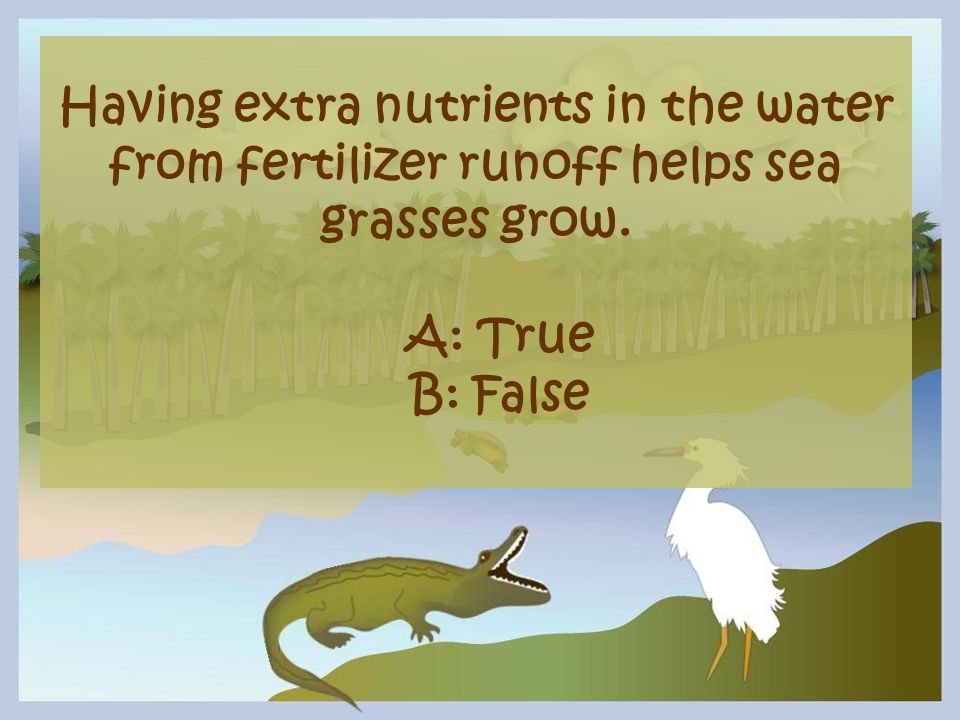 Having extra nutrients in the water from fertilizer runoff helps sea grasses grow.