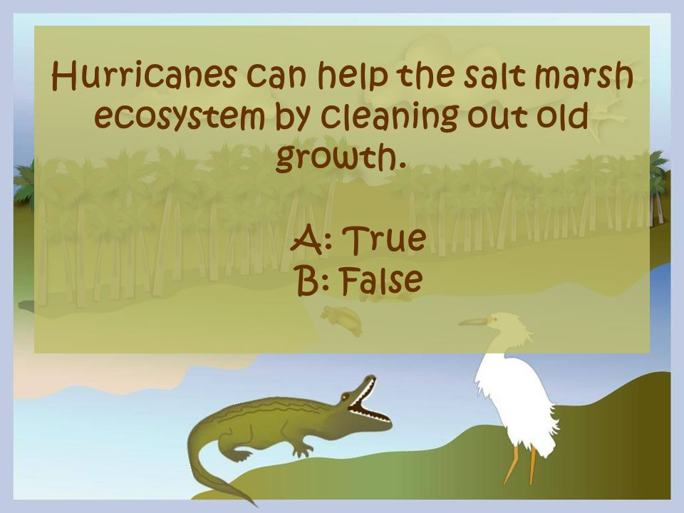 Hurricanes can help the salt marsh ecosystem by cleaning out old growth.