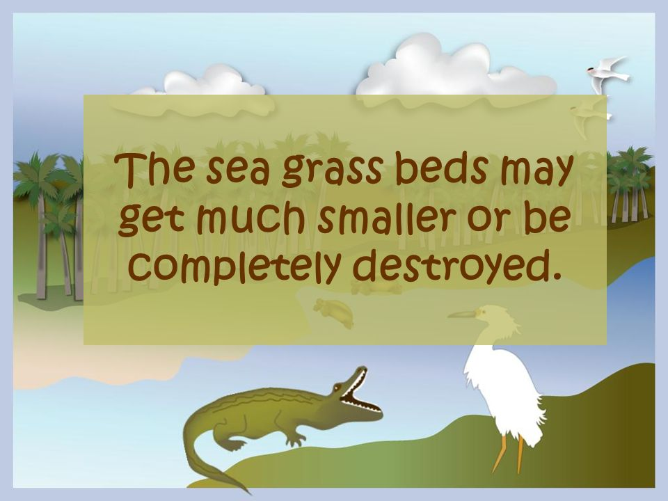 The sea grass beds may get much smaller or be completely destroyed.
