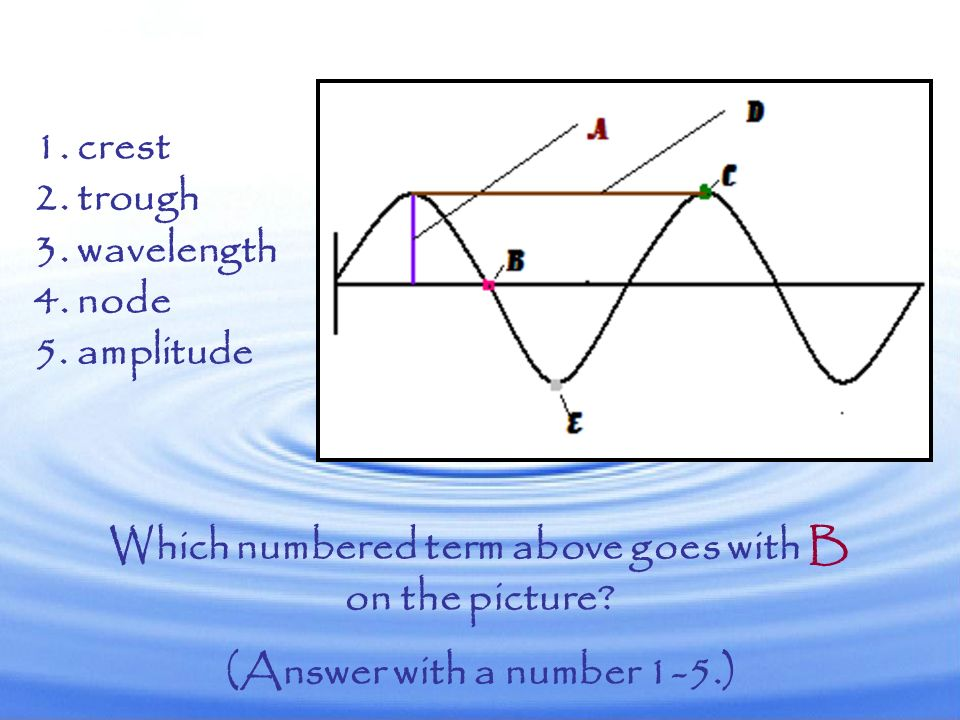 Which numbered term above goes with B (Answer with a number 1-5.)