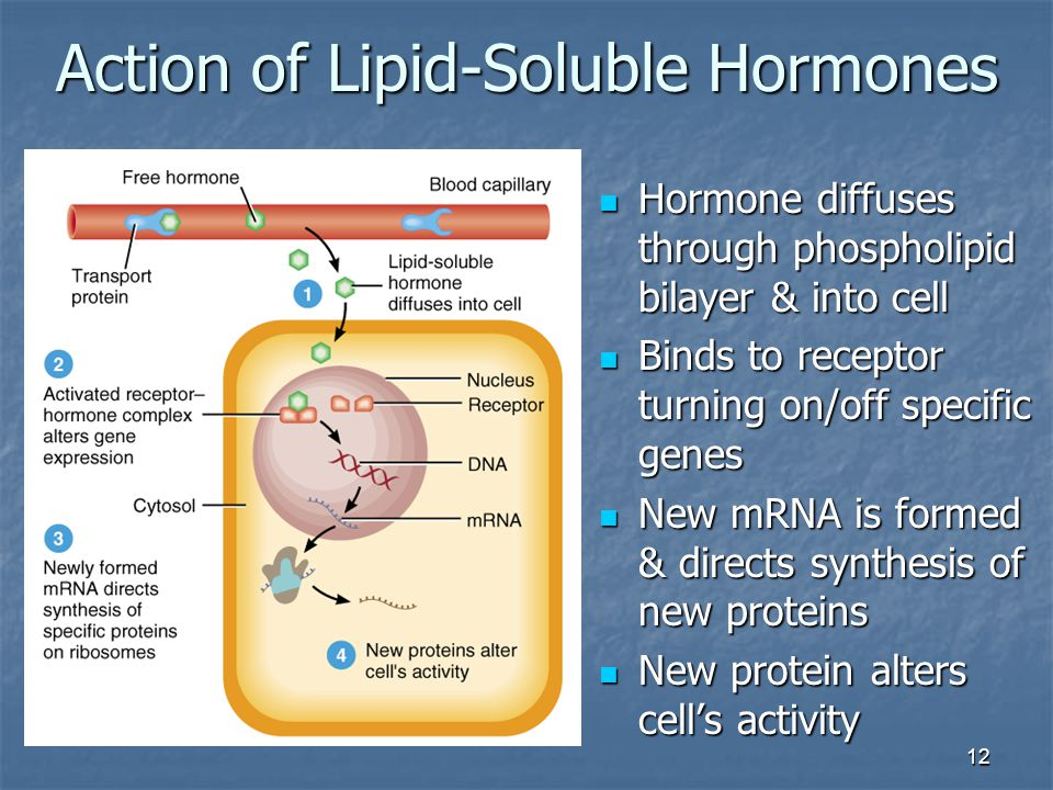 steroid hormone action on gene expression