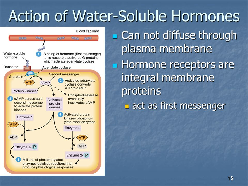 Action of Water-Soluble Hormones
