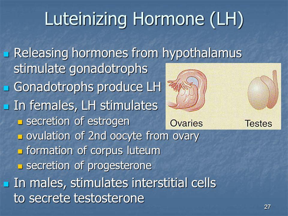 Luteinizing Hormone (LH)