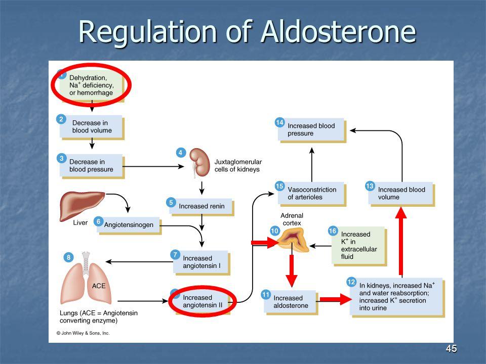 Regulation of Aldosterone