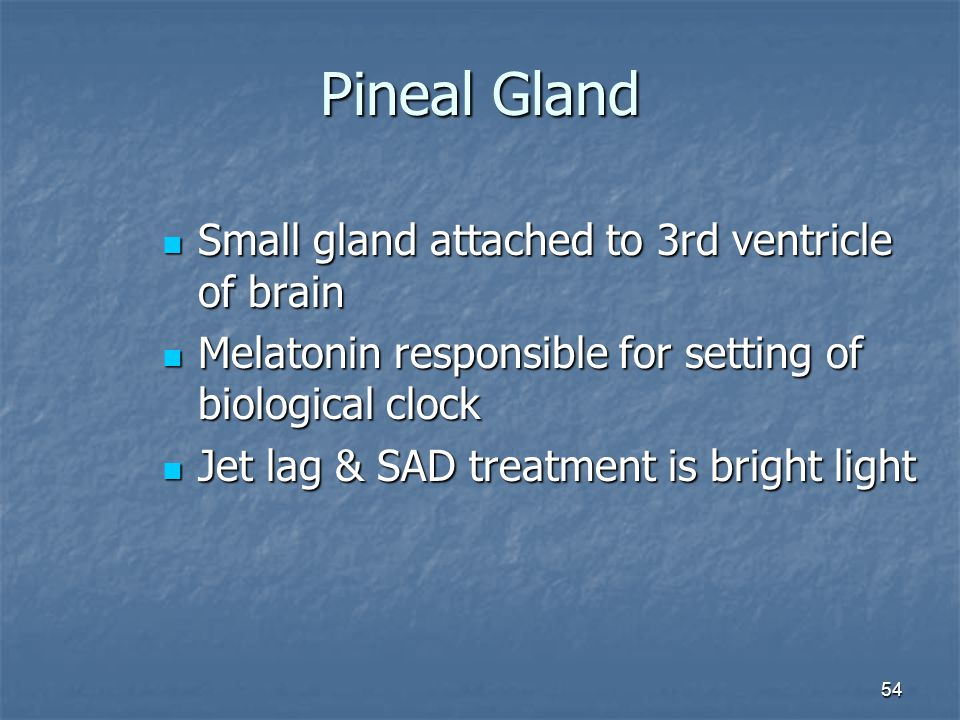 Pineal Gland Small gland attached to 3rd ventricle of brain