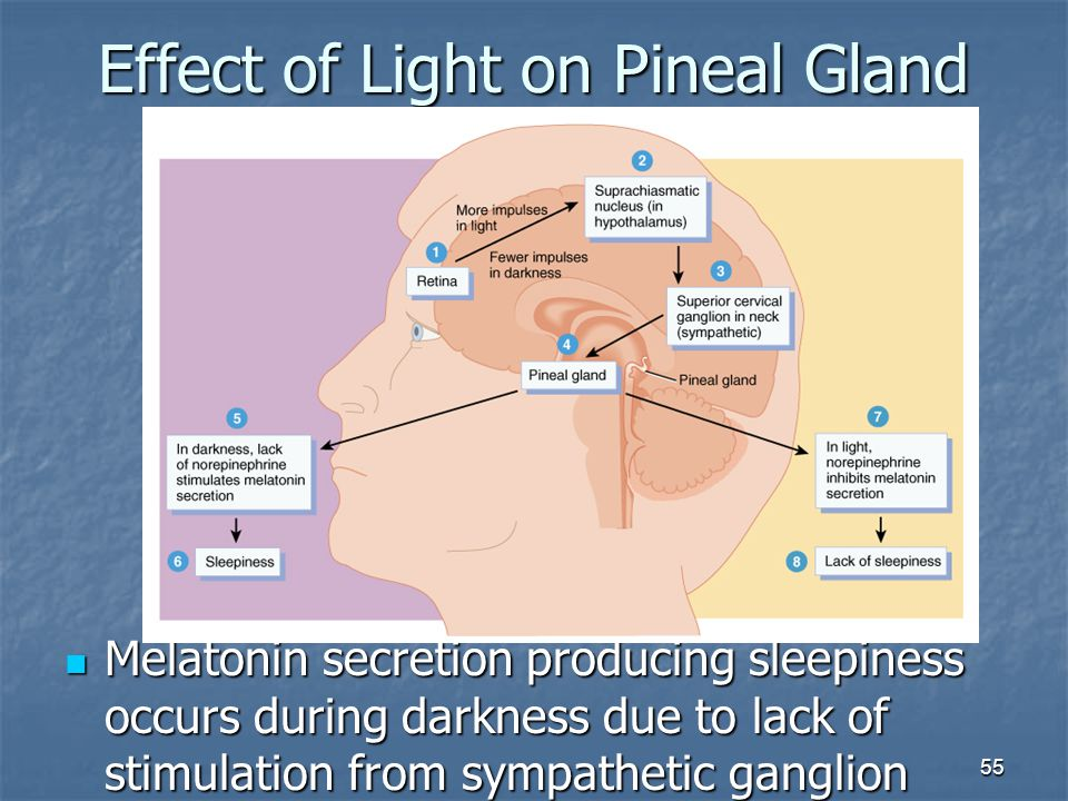 Effect of Light on Pineal Gland