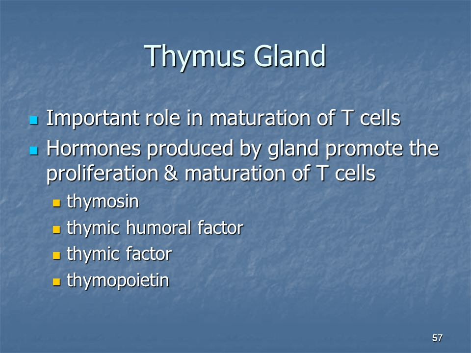 Thymus Gland Important role in maturation of T cells