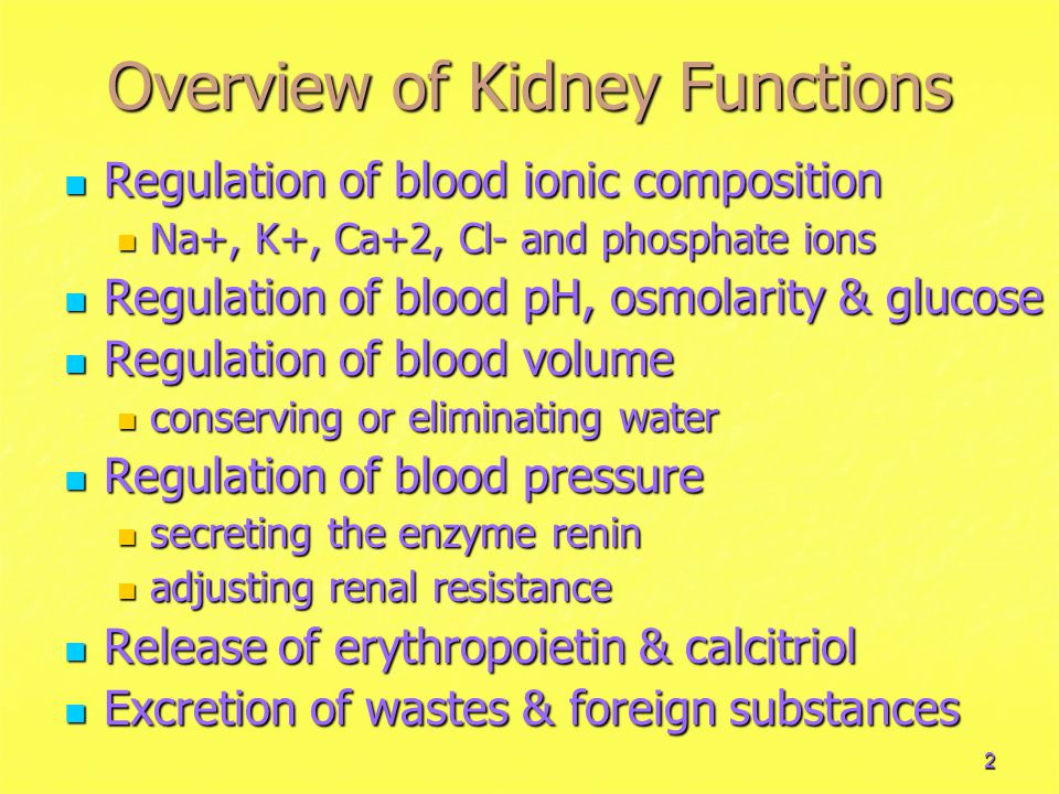 Overview of Kidney Functions