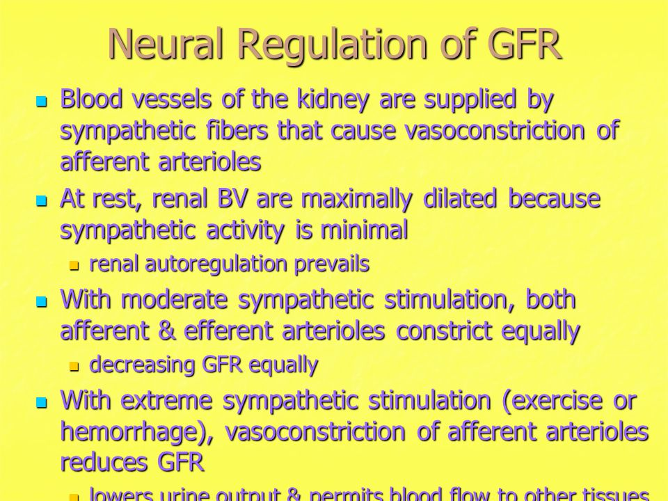 Neural Regulation of GFR