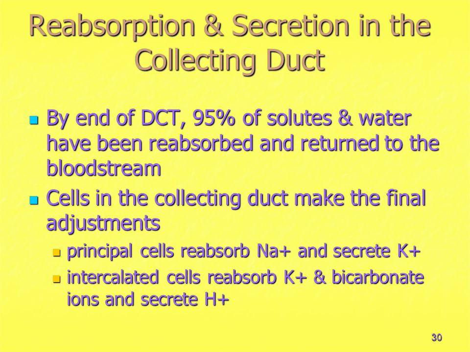 Reabsorption & Secretion in the Collecting Duct