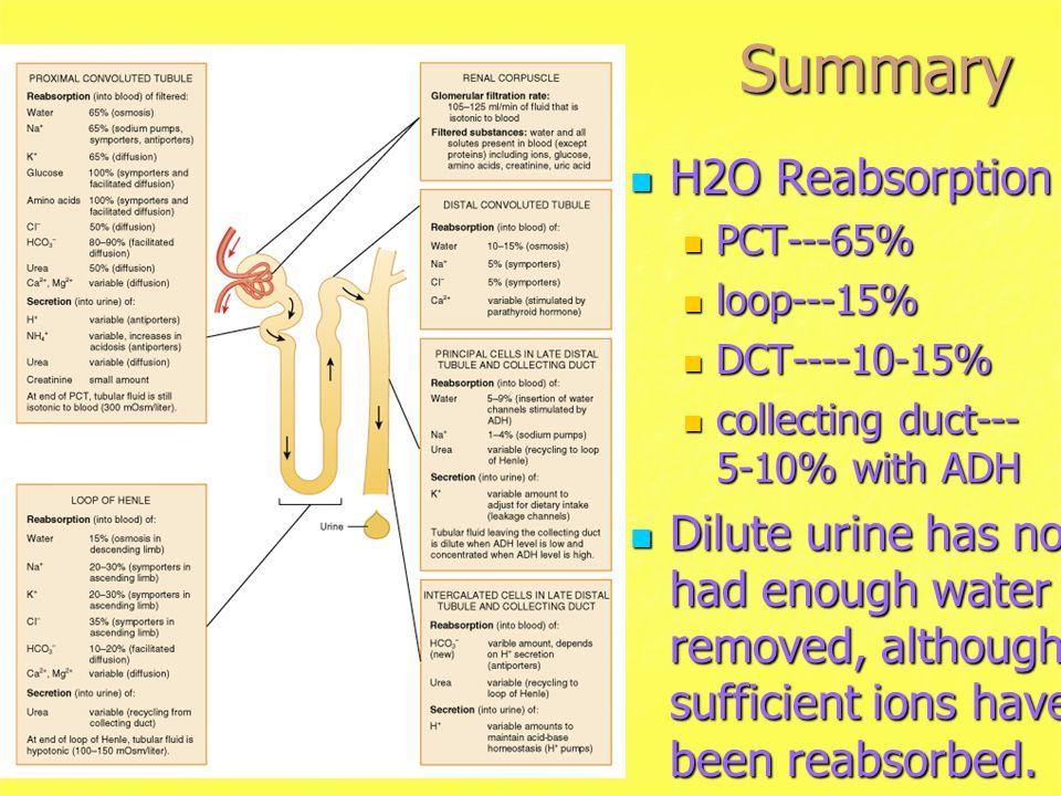 Summary H2O Reabsorption