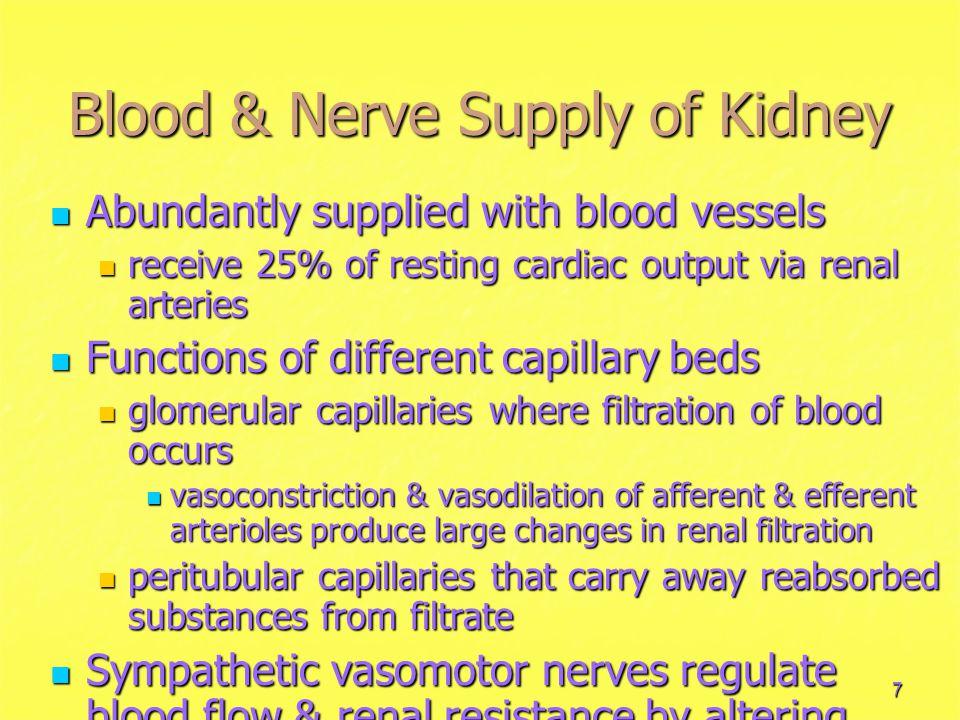 Blood & Nerve Supply of Kidney