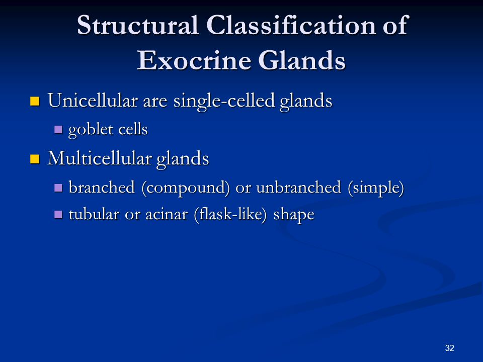Structural Classification of Exocrine Glands