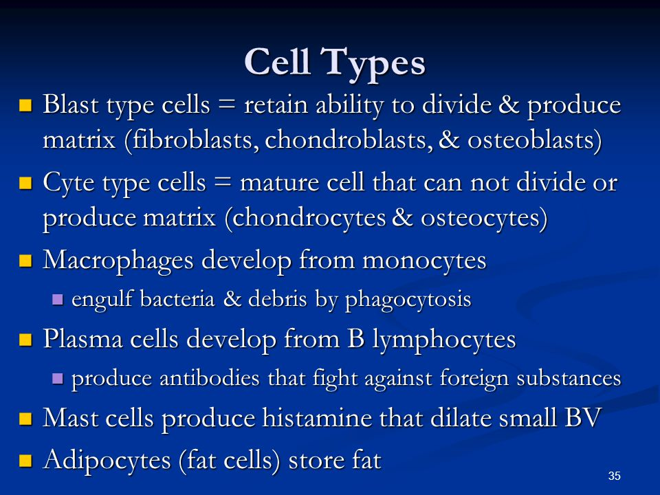 Cell Types Blast type cells = retain ability to divide & produce matrix (fibroblasts, chondroblasts, & osteoblasts)