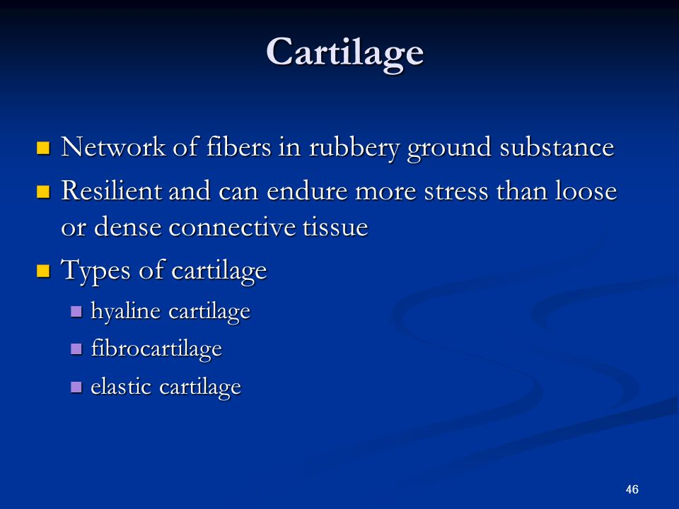 Cartilage Network of fibers in rubbery ground substance