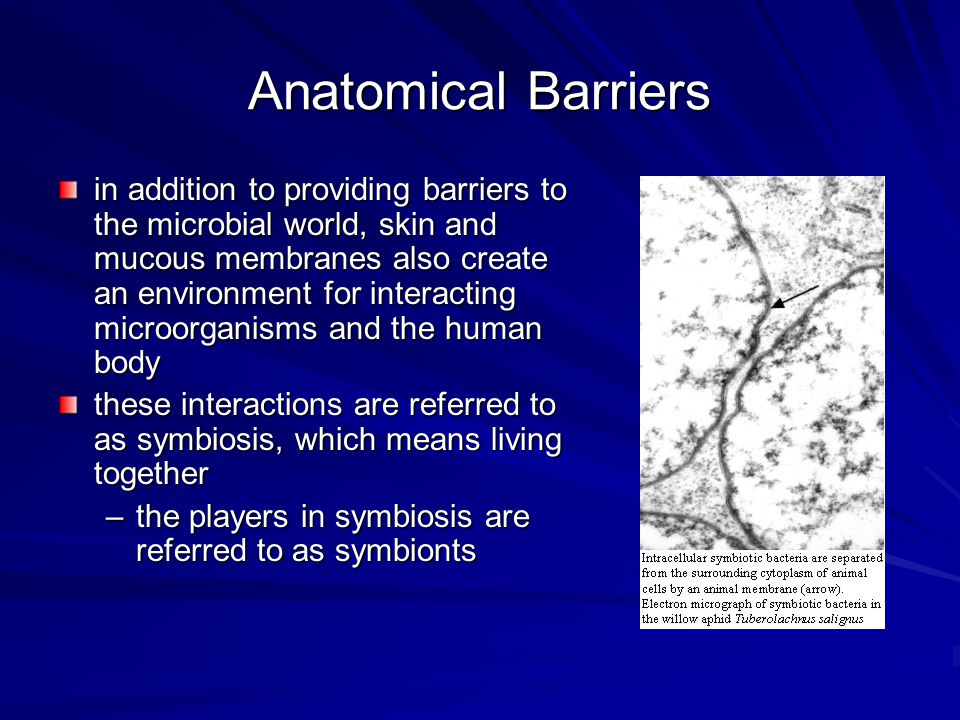 Anatomical Barriers